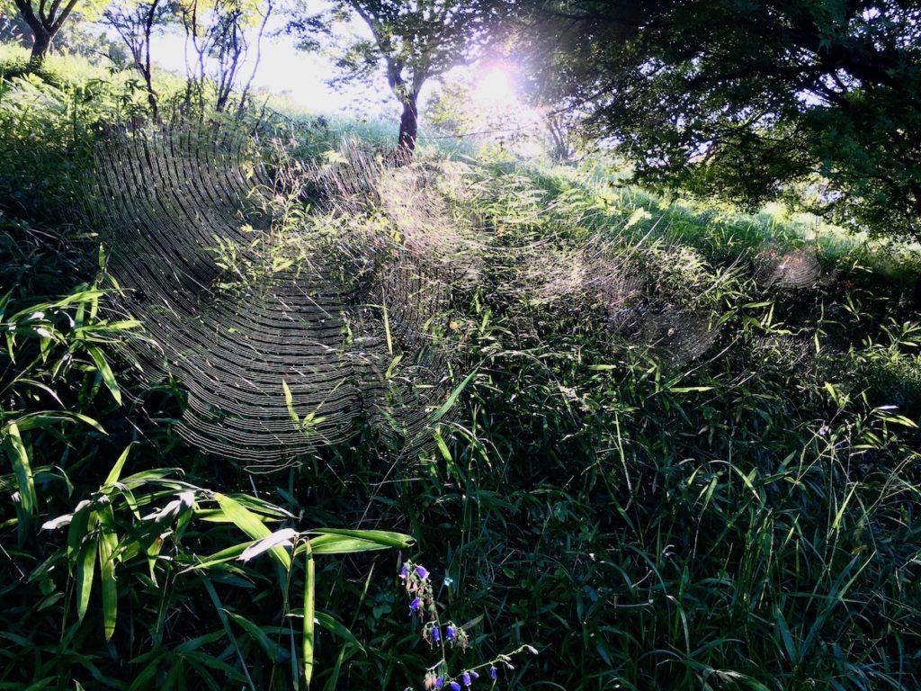 輝く蜘蛛の巣